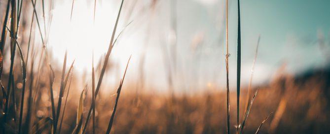 Dettaglio di fili d'erba che crescono in un prato